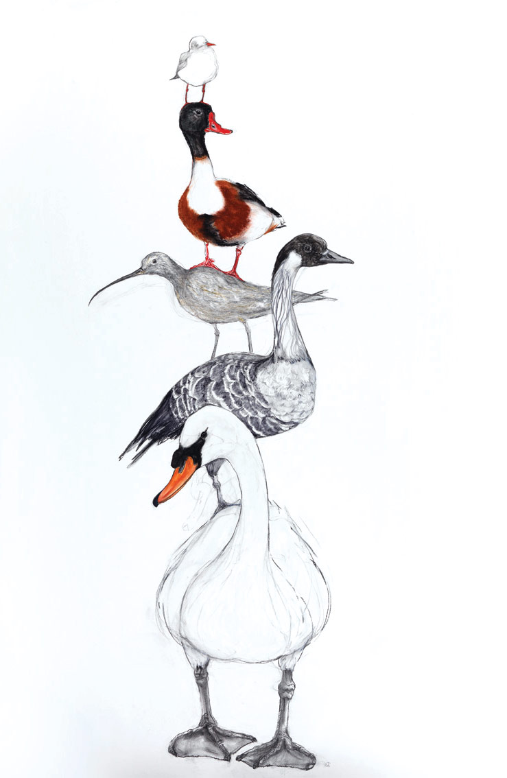 A stack of birds including a Swan, Goose, Duck and Gull by artist Jilly Cobbe