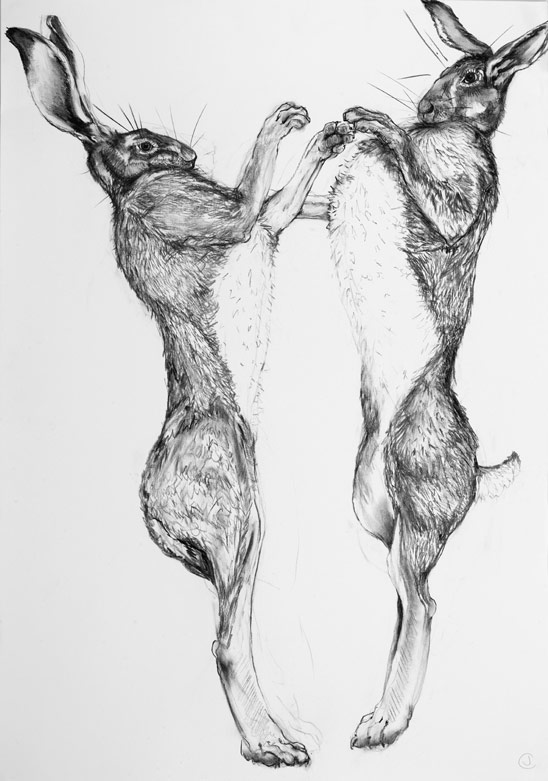 A detailed drawing of boxing hares by artist Jilly Cobbe