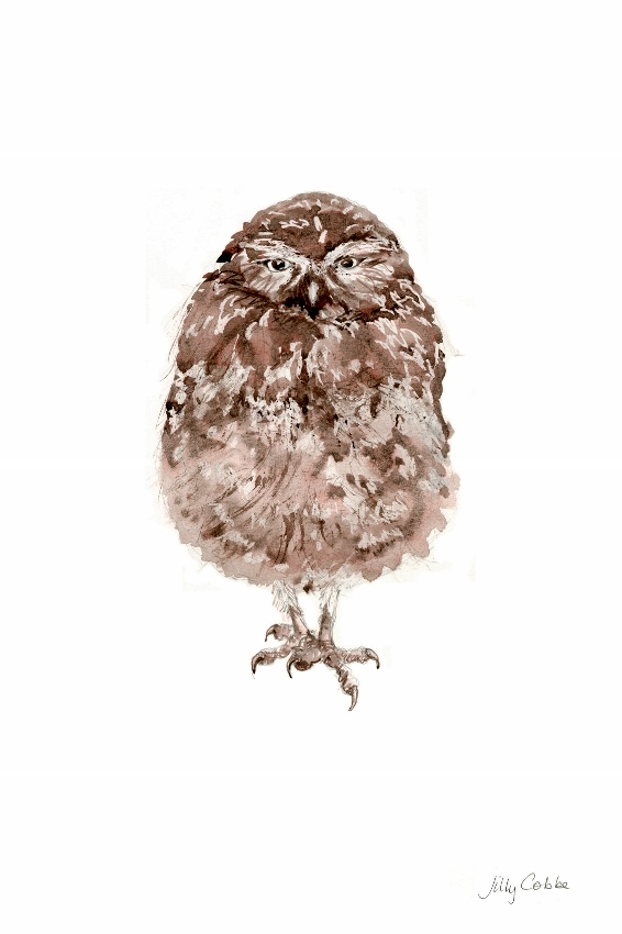 Painting of Burrowing Owl by Artist Jilly Cobbe
