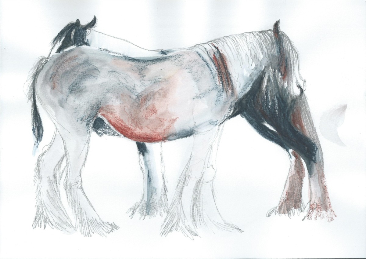 Drawing with colour of Ponies by artist Jilly Cobbe