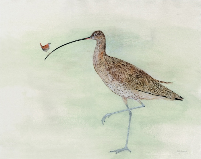 Painting of Birds - a Wren on a Curlew's beak by Artist Jilly Cobbe