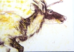 Drawing with colour of a Reindeer by artist Jilly Cobbe