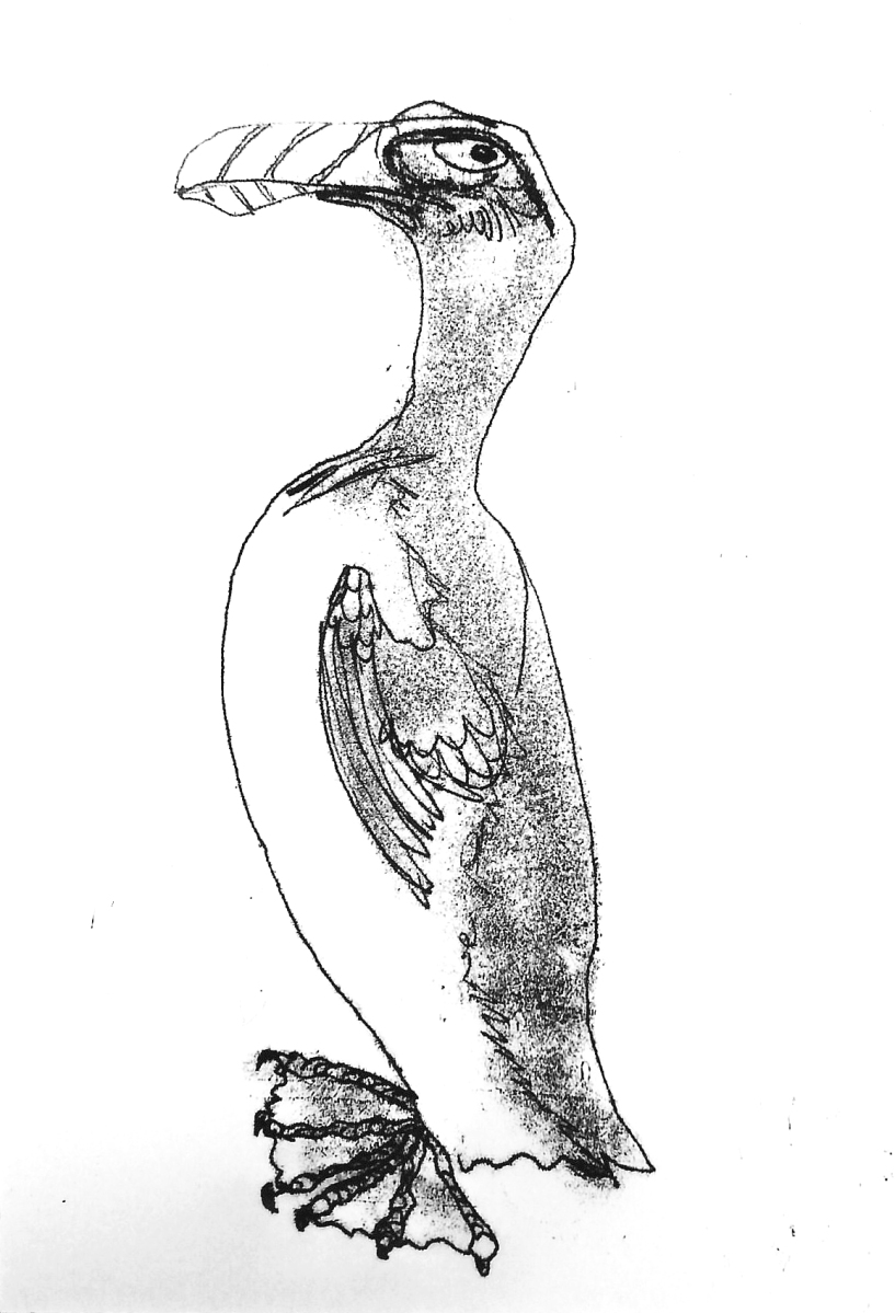 Drawing of a Great Auk Bird by artist Jilly Cobbe
