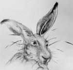 A character drawing of a hare by artist Jilly Cobbe