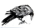 Drawing of a Raven by artist Jilly Cobbe