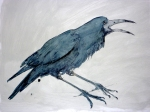 A painting of a Rook Crowing by artist Jilly Cobbe