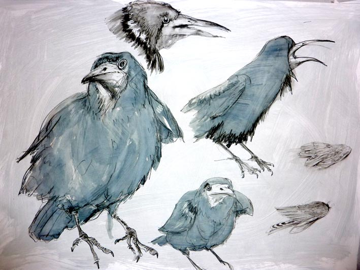 A selection of drawings of Ravens by artist Jilly Cobbe