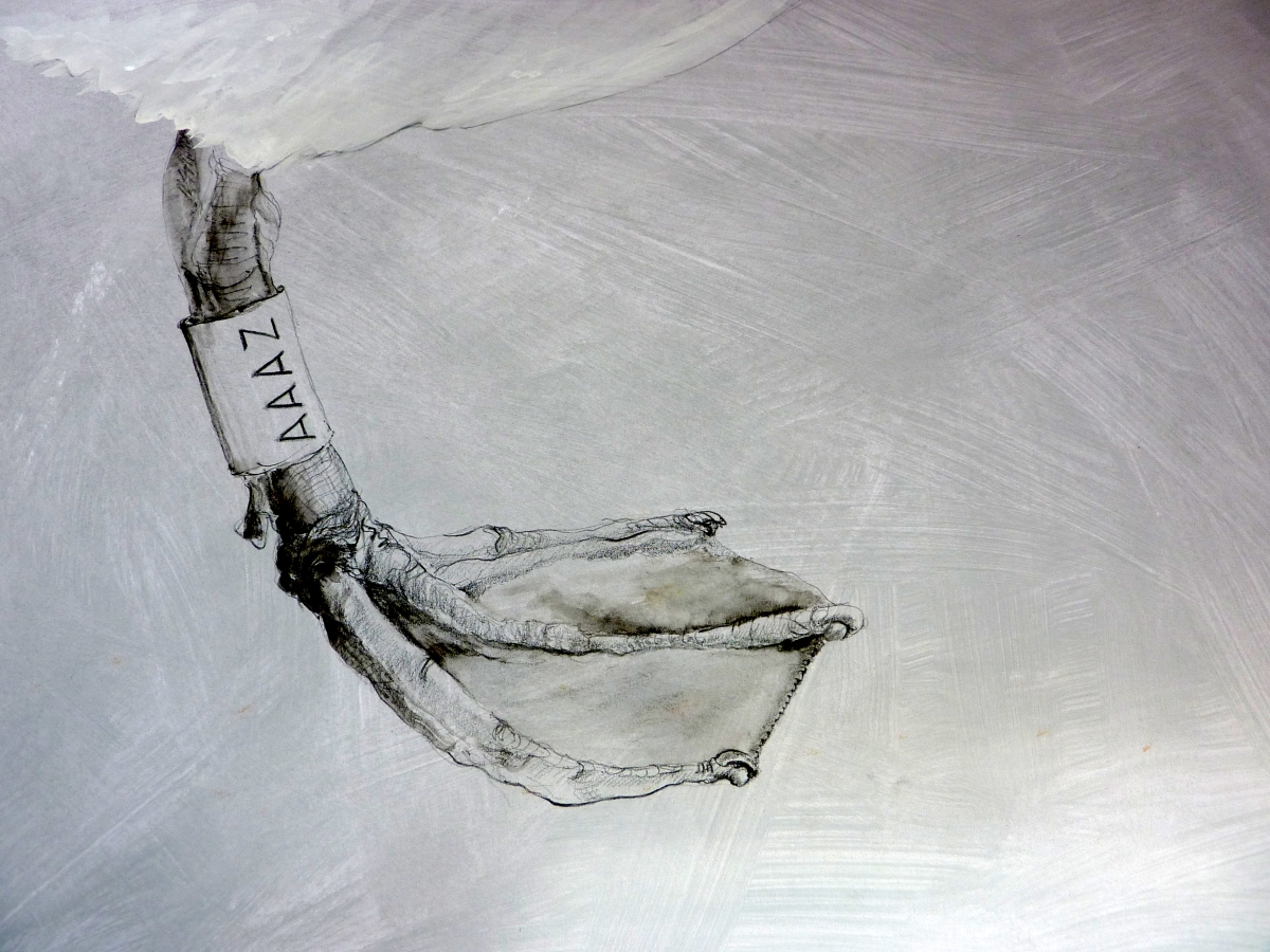 Drawing of a swan foot in detail by artist Jilly Cobbe