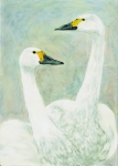 Painting of Bewick Swans by artist Jilly Cobbe