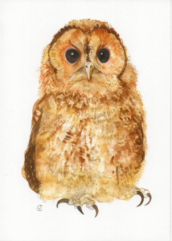 Painting of a Tawny Owl by artist Jilly Cobbe